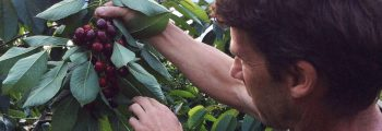 Coltivazione della pianta da Frutto